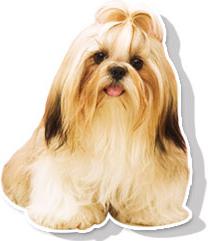 医療先進国ドイツでは「心臓の湯」と呼ばれ、心臓に負担をかけずに血液の循環を よくすることから、生活習慣病の保険適応の治療、療養、リハビリなどに利用されて います。 ペットに炭酸泉を使用することで、新陳代謝の向上に、地肌コンディションを整え、 本来の美しい毛ヅヤへと導きます。