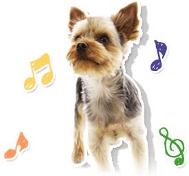 ペットサロンパールでは、お客様の愛犬を大切にお預かりいたします。朝夕2回の散歩を行います。突然のお泊りでも、わんちゃんがストレスを感じないよう、お客様に健康な状態で お渡しできるよう、細心の注意を払ってお預かりしております。